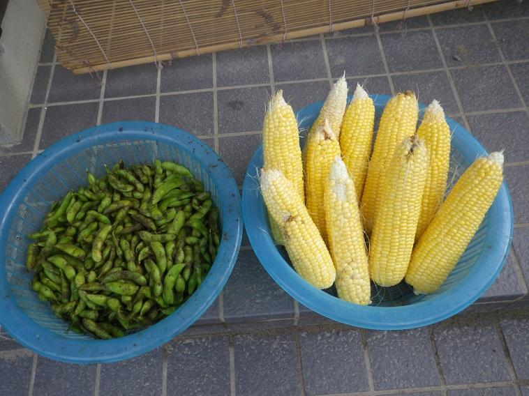 収穫1_14_07_05