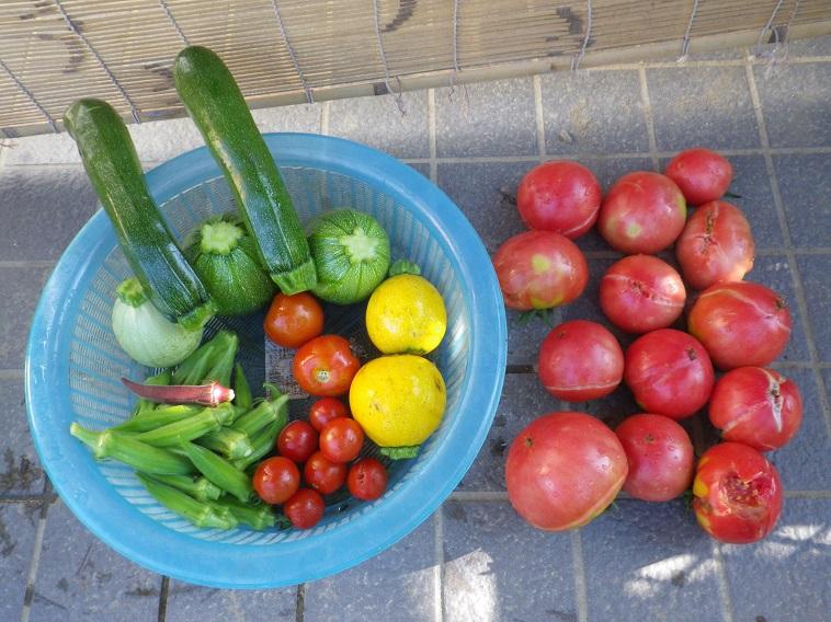 収穫2_14_07_05