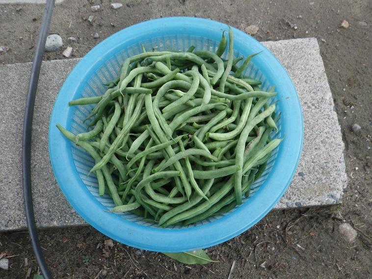 収穫5_14_07_05