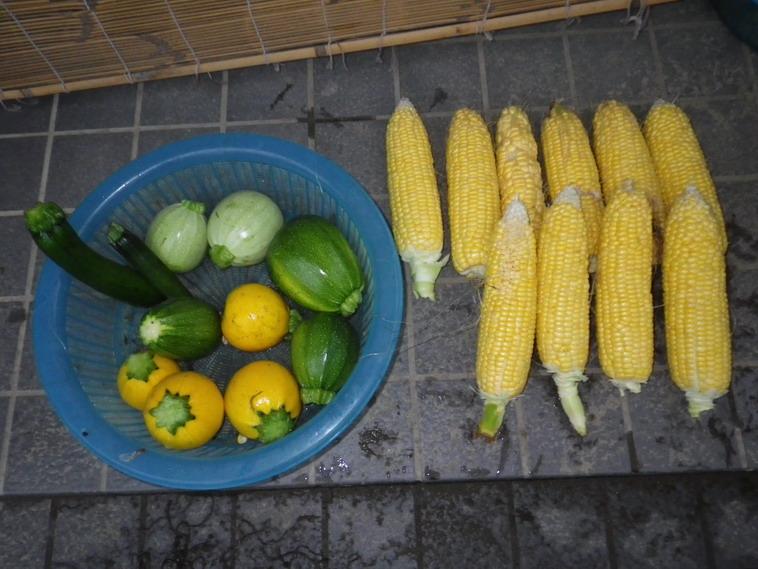 収穫2_14_07_07