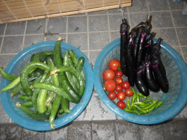 収穫14_07_07