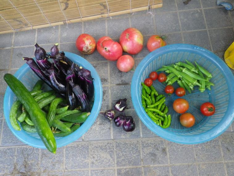 収穫14_07_08