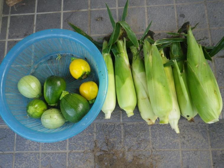 収穫2_14_07_08