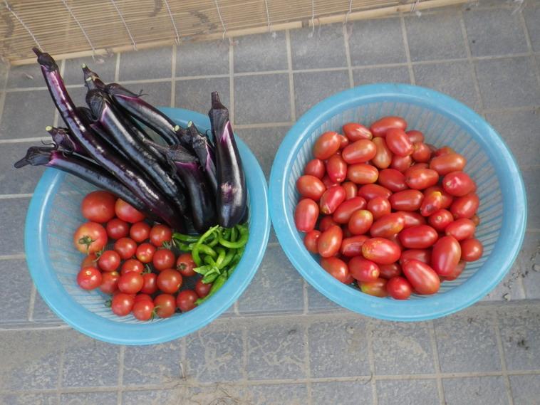 収穫14_07_09