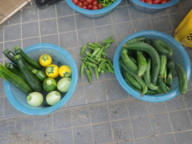 収穫2_14_07_09