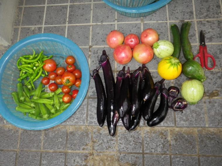 収穫14_07_10