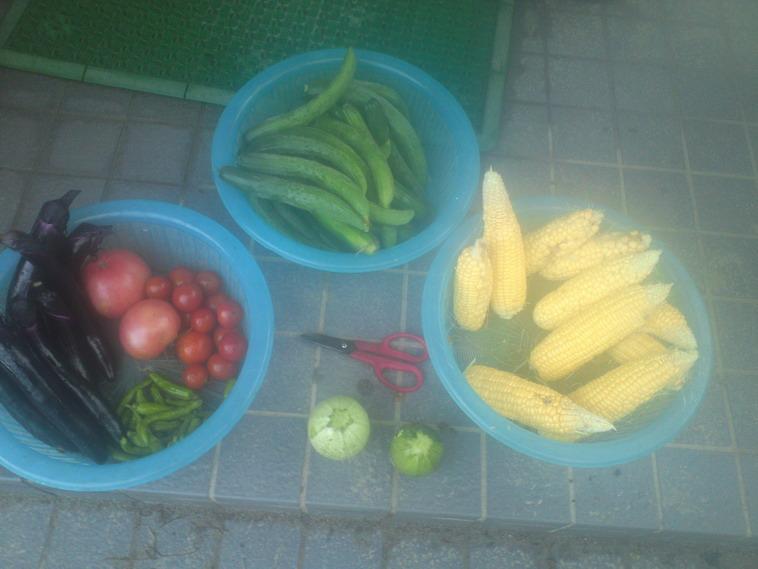 収穫14_07_11