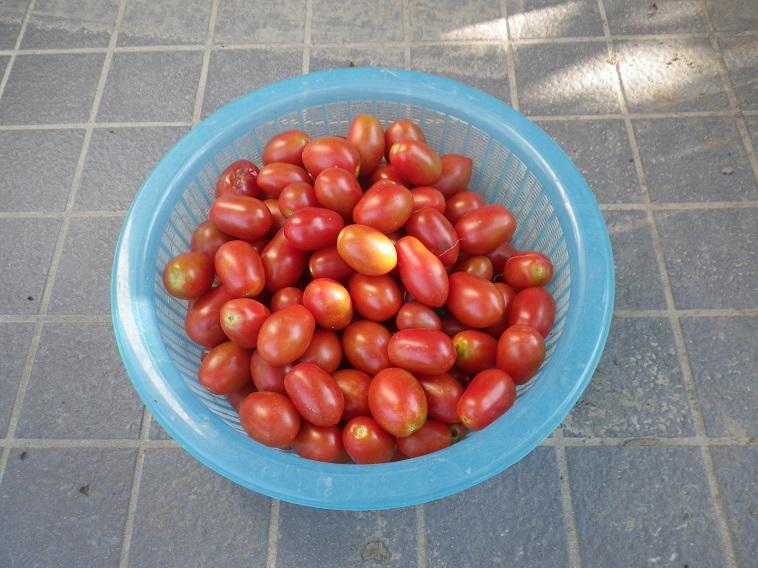 収穫3_14_07_12