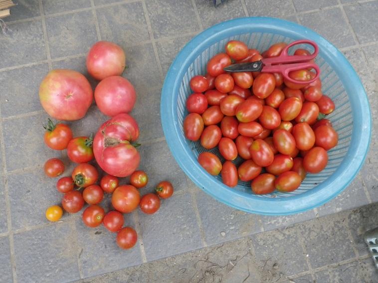 収穫3_14_07_13