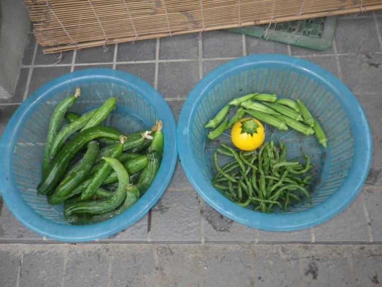 収穫1_14_07_14