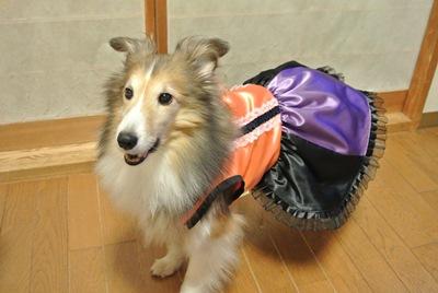 ハロウィン衣装3ぱっきん
