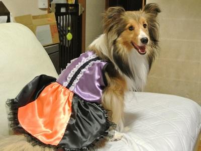 ハロウィン衣装4空姫
