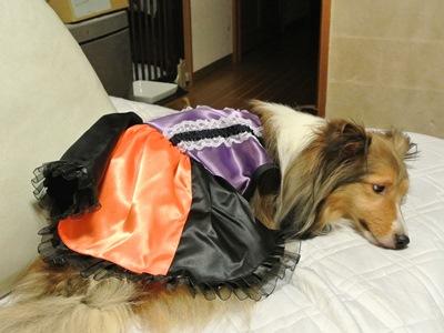 ハロウィン衣装5空姫すねすね