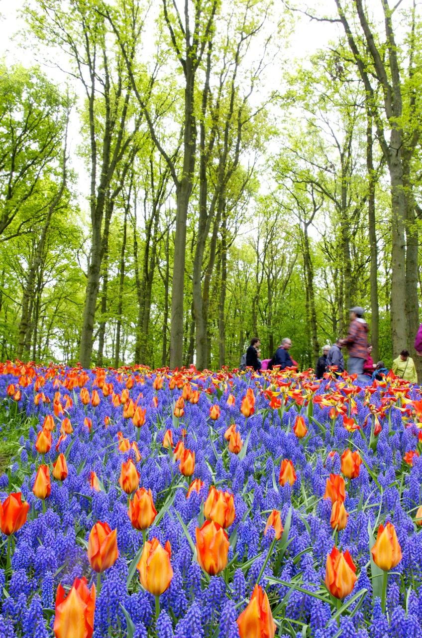 オランダ・キューケンホフ公園