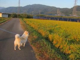 黄金色の朝日_5873