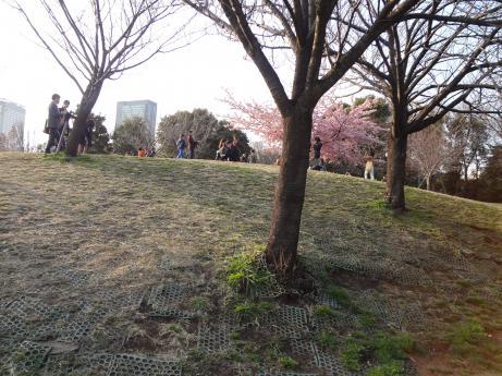 西郷山公園芝生