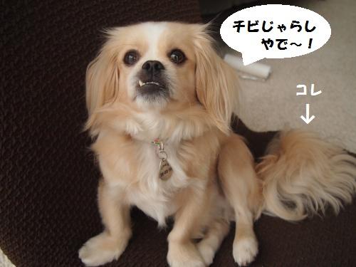 013_convert_20140616161847.jpg