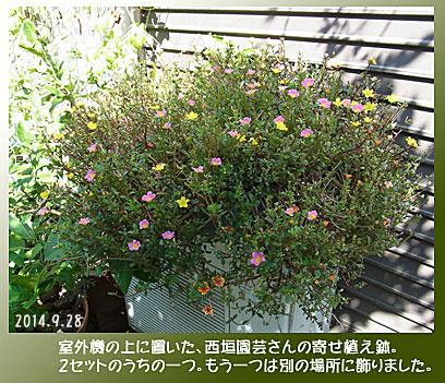 141005nishigaki.jpg