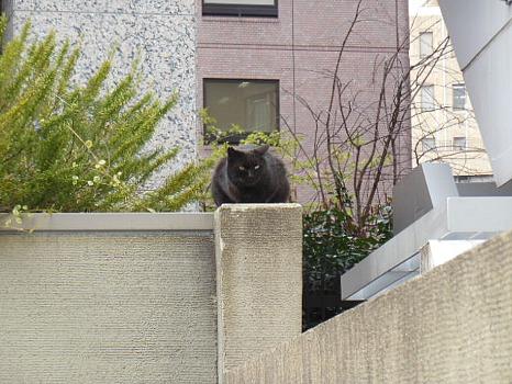 四谷の黒猫