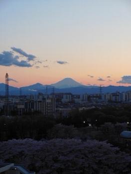 富士と桜1