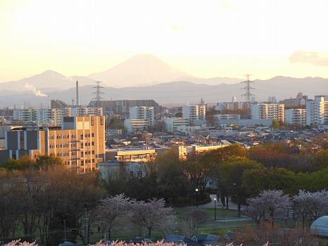 富士と桜2