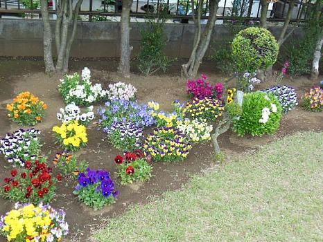 遊歩道のわきの花壇