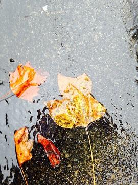 雨と葉270x
