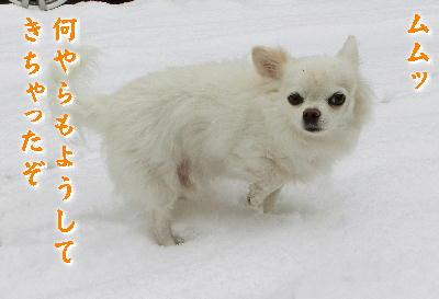 140214-大雪のバレンタイン-2