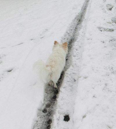 140214-大雪のバレンタイン-3