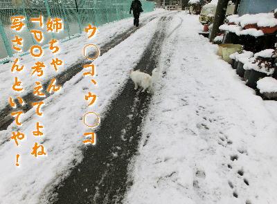140214-大雪のバレンタイン-4