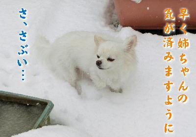 140214-大雪のバレンタイン-7