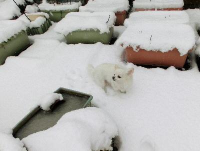 140214-大雪のバレンタイン-6