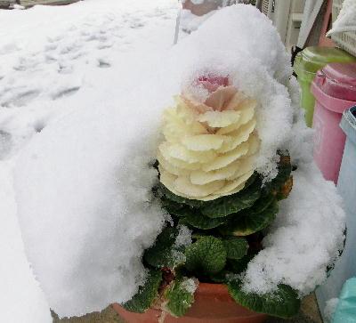 140214-大雪のバレンタイ庭-10