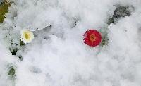 140214-大雪のバレンタイ庭-7