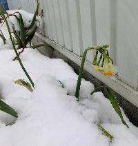 140214-大雪のバレンタイ庭-8