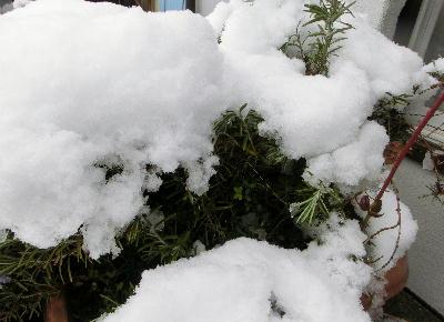 140214-大雪のバレンタイ庭-9