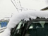 140214-大雪のバレンタイ庭-11
