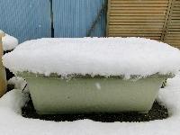 140214-大雪のバレンタイ庭-12
