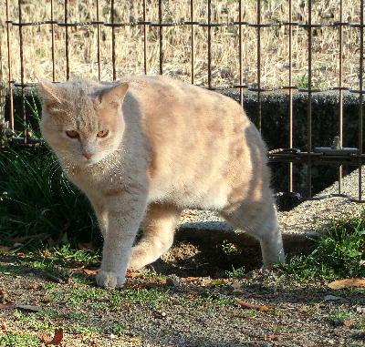 140219-野良ネコ-3