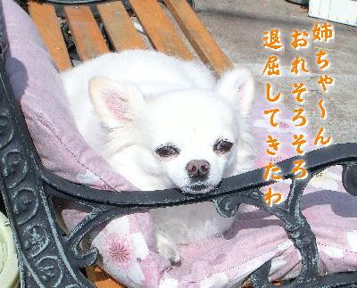 140223-日向ぼっこ銀ちゃん-5