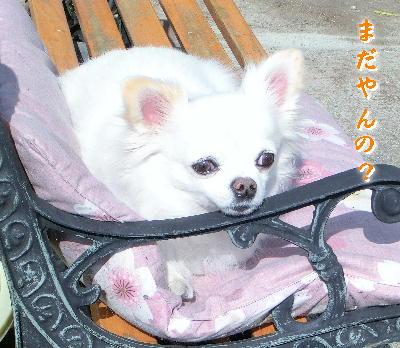 140223-日向ぼっこ銀ちゃん-6