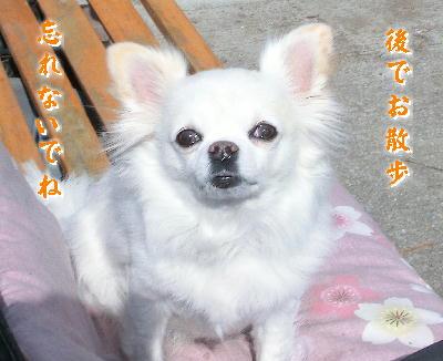 140223-日向ぼっこ銀ちゃん-3