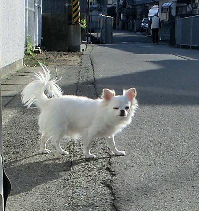 140226-銀散歩i-2