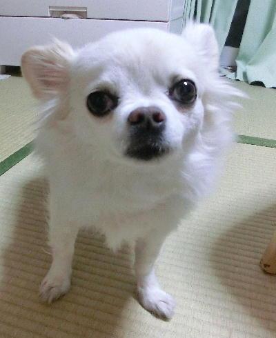 140303-銀ちゃんご自宅-2
