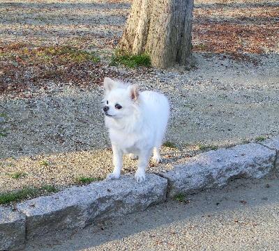 140321-銀ちゃん散歩-4