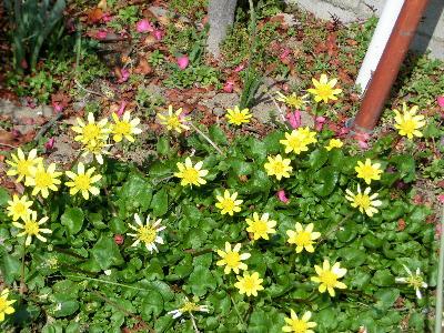 140426-お隣の花-3