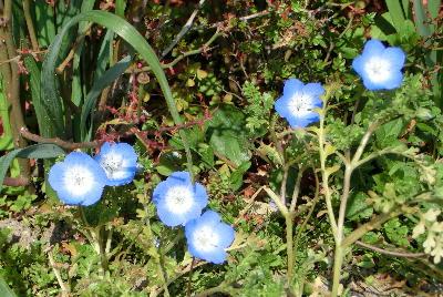 140426-お隣の花-2