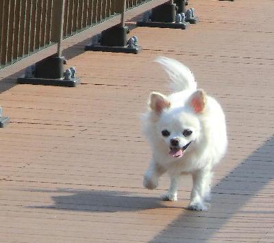 140506-銀ちゃん散歩橋の上-1