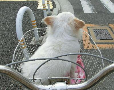 140514-自転車でお出かけした日の事-1