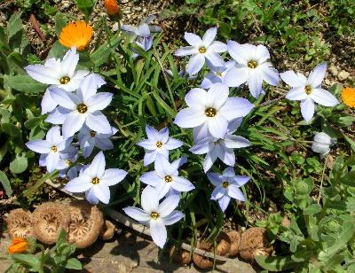 140516-船渡池公園の花-2